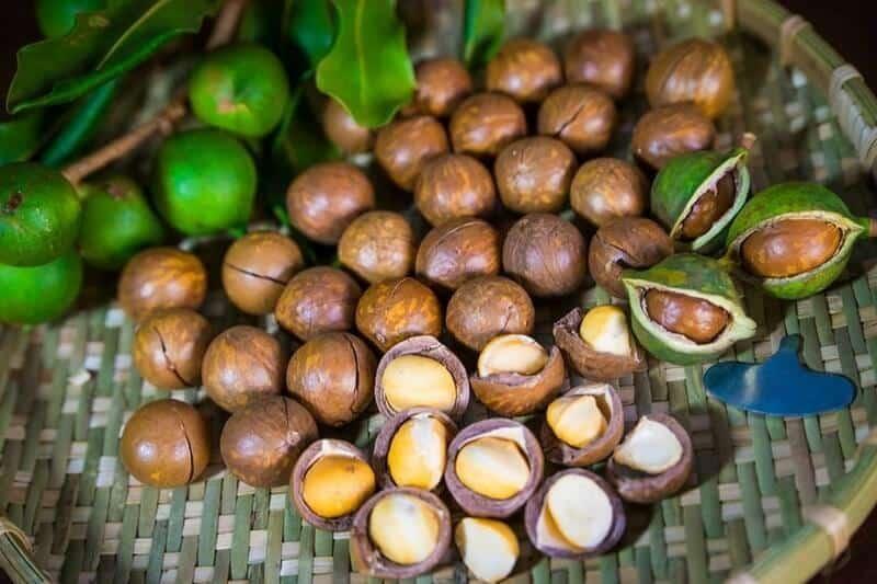 Cây macca bắt nguồn từ nước Úc