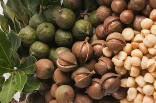 Macca Úc nổi tiếng thế giới bởi hương vị thơm ngon, hấp dẫn bậc nhất